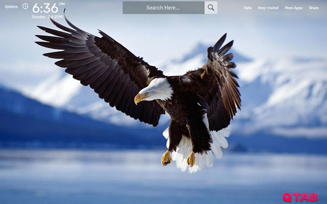 Eagle Wallpapers HD Theme