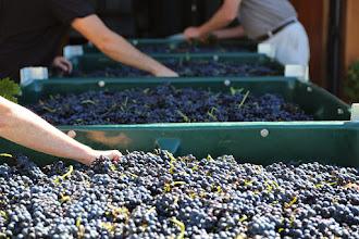 Photo: Around Hermitage Wine, Food, Weddings, Boutique accommodation Hunter Valley