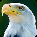 Eagle HD Live Wallpaper icon
