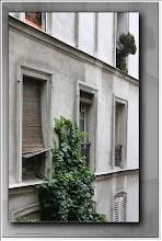 Foto: Fenstergrün