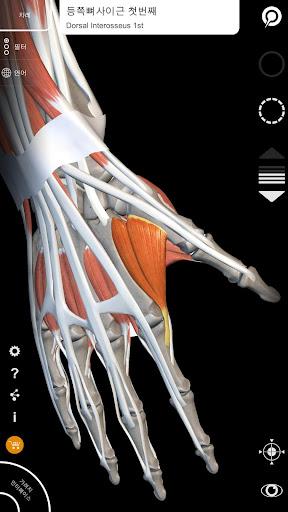근육계 - 상지 - 3D 해부도 - 인체의 뼈와 근육