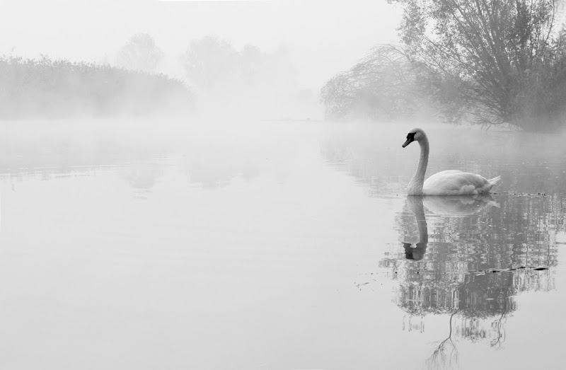 Lost in the fog... di Licia Piazza