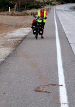 Photo: (Year 3) Day 35 - A Rattlesnake