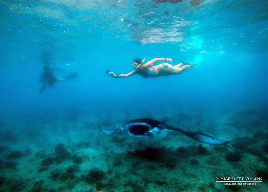 nadar com mantas