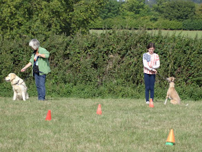 Photo: Hamish Golden / Nina and Henry Whippet / Lily preparing for the Speed Race