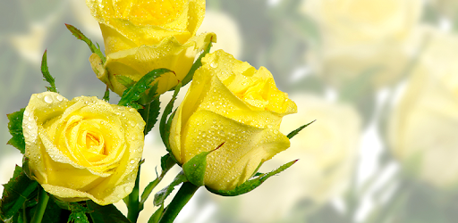 ✓ Download Gambar Bunga Mawar Kuning