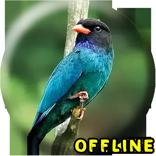 Download Suara Burung Tengkek Buto Bagus Untuk Masteran