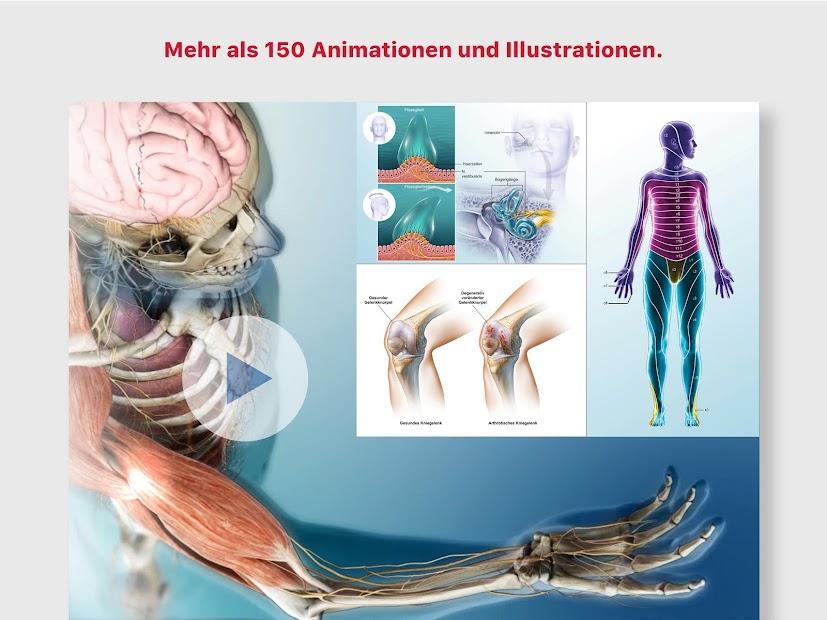 Niedlich Erforschung Der Anatomie Und Physiologie Im Labor ...