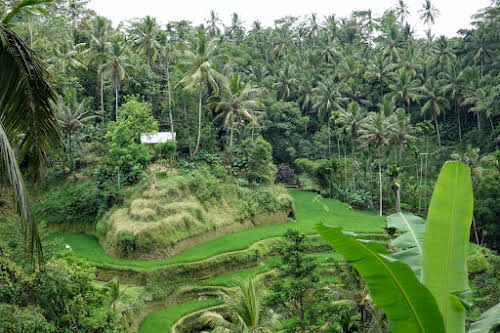 Indonesia. Bali Tegalalang Rice Terraces Banner. House hidden by the vegetation
