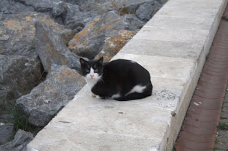 Photo: Jeden z tysięcy turecich kotów - były dosłownie wszędzie - ten akurat przypominał naszego Bufocza :)