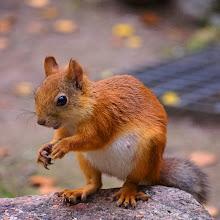 Photo: Mrs Squirrel is preggers