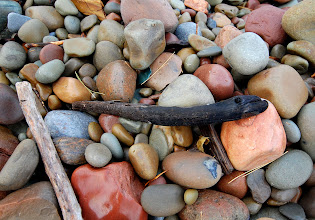 Photo: Smooth stones, sticks and other debris line the beach at Rainbow Shores on the eastern edge of Lake Ontario in Pulaski, NY. This stick looks like an eel.