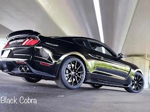 シェルビー GT350 のカスタム事例画像 Black Cobraさんの2019年09月23日17:54の投稿