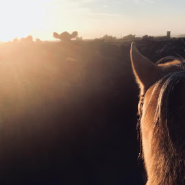 Cowhorse  by Kati Cash - Uncategorized All Uncategorized ( sunrise, cowhorse, cows, early morning, dust )