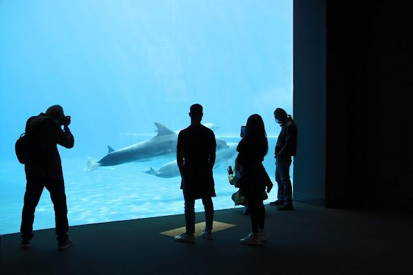 innnamorati dei delfini di Naldina Fornasari
