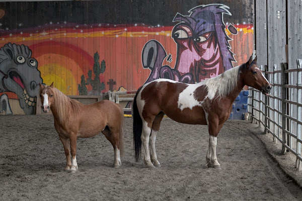 Cavalli di thomas_gutschi