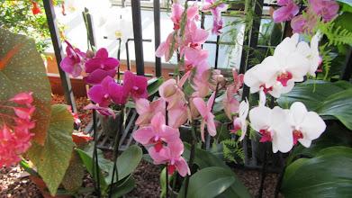 Photo: Orkideoita.