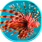 Sea Life Live Wallpaper  Animated Backgrounds icon