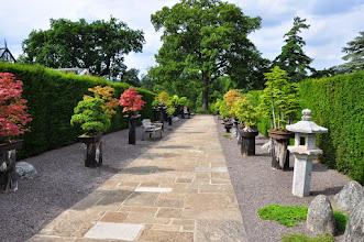Photo: Heron's Bonsai Walk - bonsaicollectie - Kew - Royal Botanical Gardens