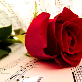 red rose in sheet music by László Nagy - Artistic Objects Other Objects (  )