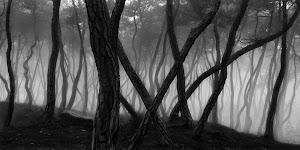 grillige boomstammen op mistige dag