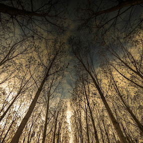 There must be a way by Alberto Ghizzi Panizza - Landscapes Forests ( wood, poplar, tree, sunse, forest, sunrise, light, save the forests worldwide, forests,  )