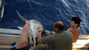 Marineros  de Carboneras en plena captura artesanal de un ejemplar de pez espada.