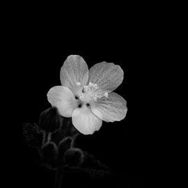 by Shajin Nambiar - Black & White Flowers & Plants