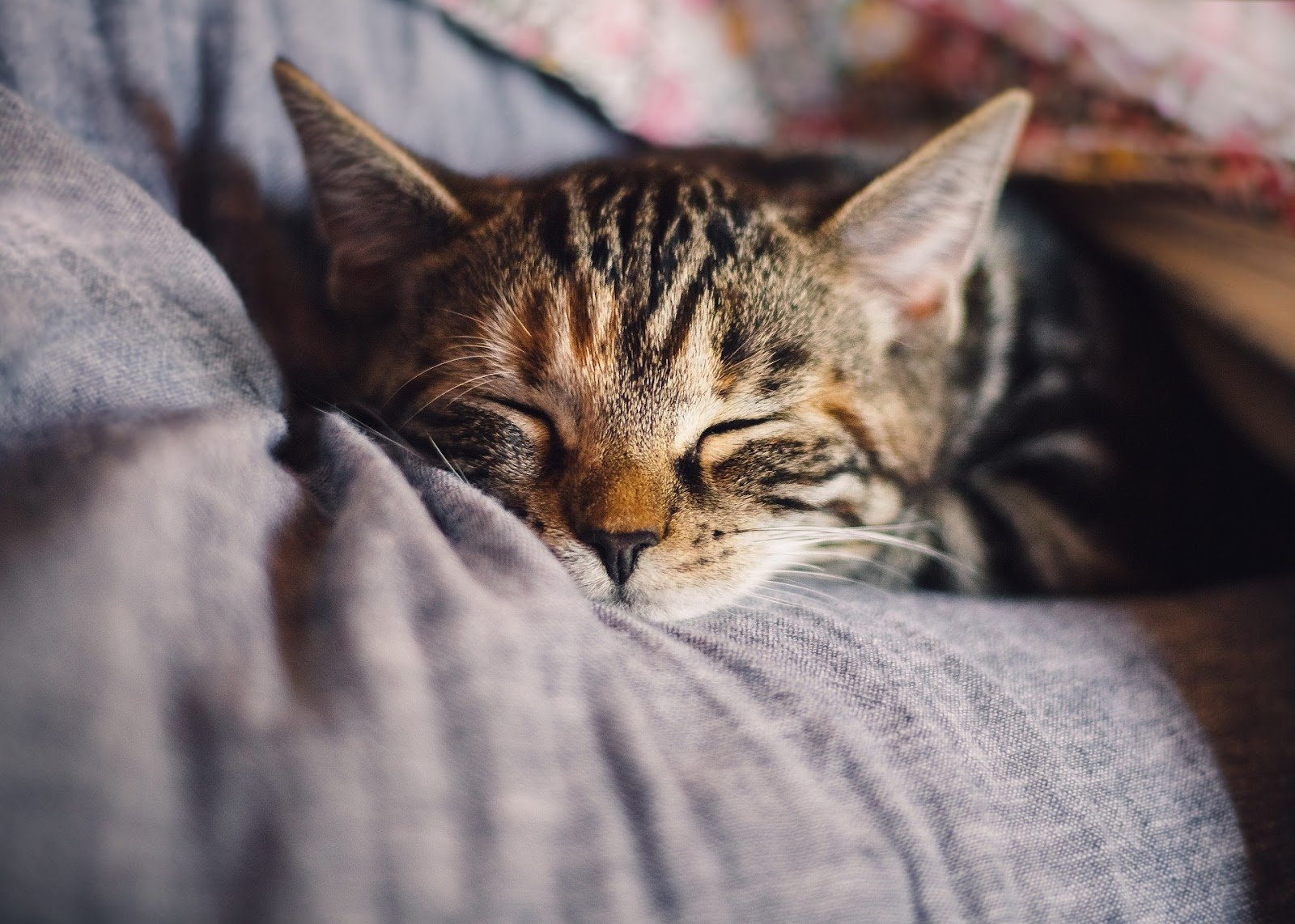 cat napping on pillow in comfy bed
