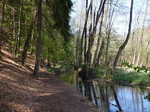 Photo: Všechna tekoucí voda je potok Pšovka.