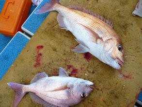 Photo: 真鯛のダブルキャッチでしたー!・・・この後、落ち着いて残りのラーメンをおいしそうに?食べ終えました。