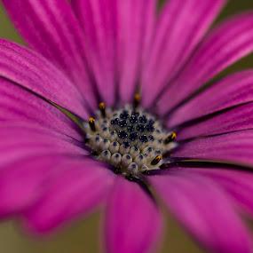 purple flower by Francois Larocque - Flowers Single Flower ( macro, purple flower, seed, pollen, flower )