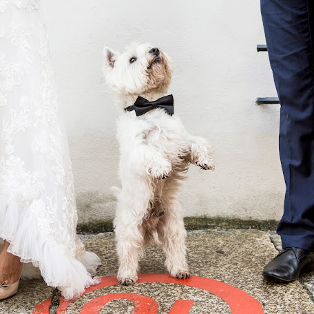 Wedding photographer Alan Zaradny (AlanZaradny). Photo of 20.04.2016