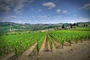 Уникальные виноградники