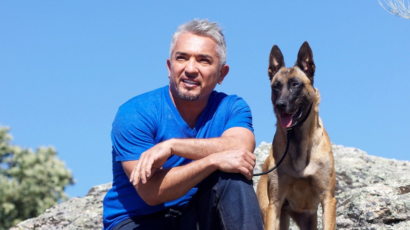 Watch Cesar Millan's Leader of the Pack live