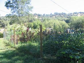 Photo: Yoga Farm, CA - veg garden