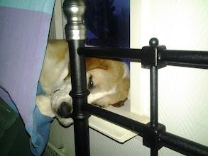 Photo: Aamunaama...Luulin että Helmi oli jo unohtanut tämän ikkunalautajutun, mutta eipäs vaan :)
