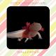 Axolotl Wallpaper HD Download for PC Windows 10/8/7