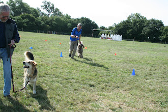 Photo: DogBasics Fun Day 2013 - Spoon Race Slalom with John/Gretl Golden X and Paul/Brian Labradoodle