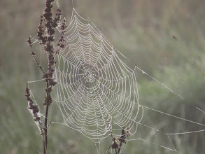 Photo: Priorslee Lake So that was Spring and Summer then: and now here is a spider-web just like Autumn! (Ed Wilson)