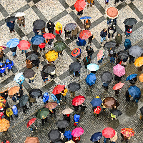 Brolly Brigade by Rory McDonald - Landscapes Travel