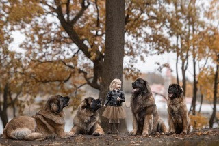 For Dog Lovers 12