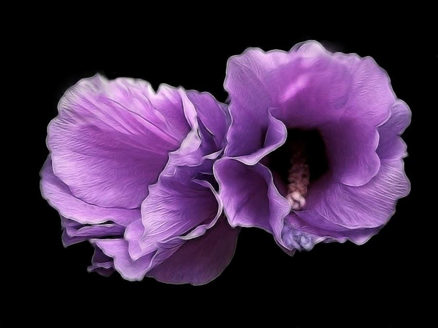 flying petals by Mirela Korolija - Nature Up Close Flowers - 2011-2013