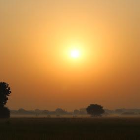 Colorful Sunrise by Manish Upadhyay - Landscapes Sunsets & Sunrises ( tree, nature, sunrise, morning, landscape, golden hour,  )