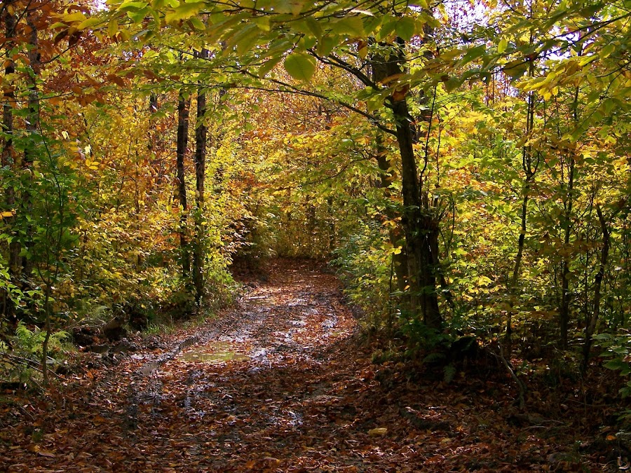 Pathway by Gilman Michaud - Nature Up Close Other Natural Objects