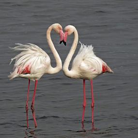 by Carola De Jager - Animals Birds