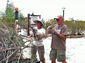 Photo: Morry and Sue Stevens loading dead wood from the trees on the Schoolhouse yard into a trailer. (Jackie Ridge)