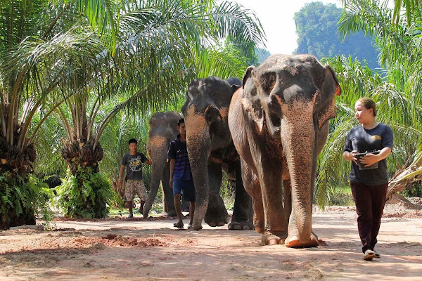 Walk with the elephants through the sanctuary