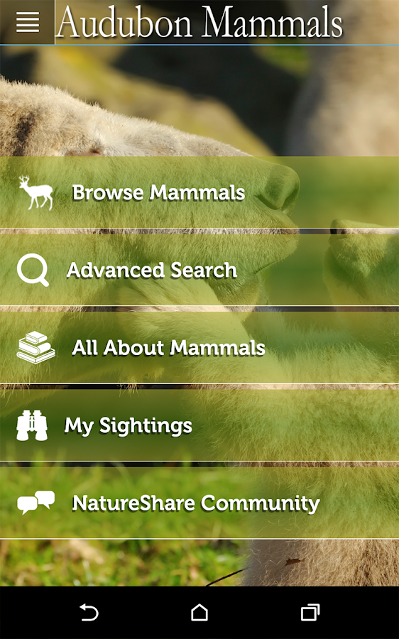 Audubon Mammals- screenshot
