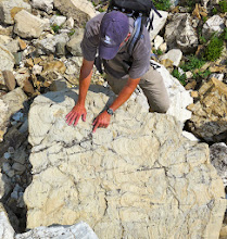 Photo: Stromatolites in the Appekunny formation